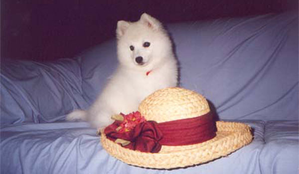 Chanel-on-Lounge-with-Hat-japanese-spitz