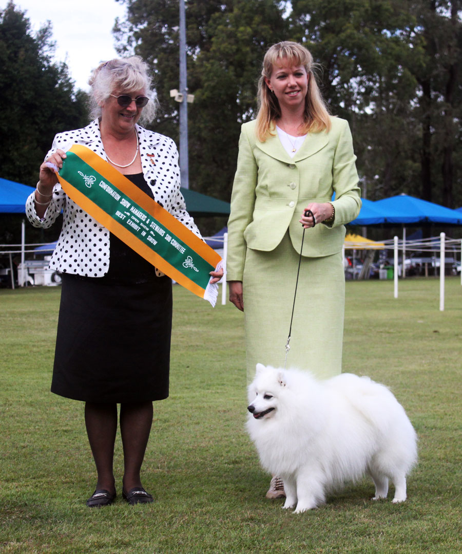 Da-Vinci-BIS-os-Showing-Your-Japanese-Spitz