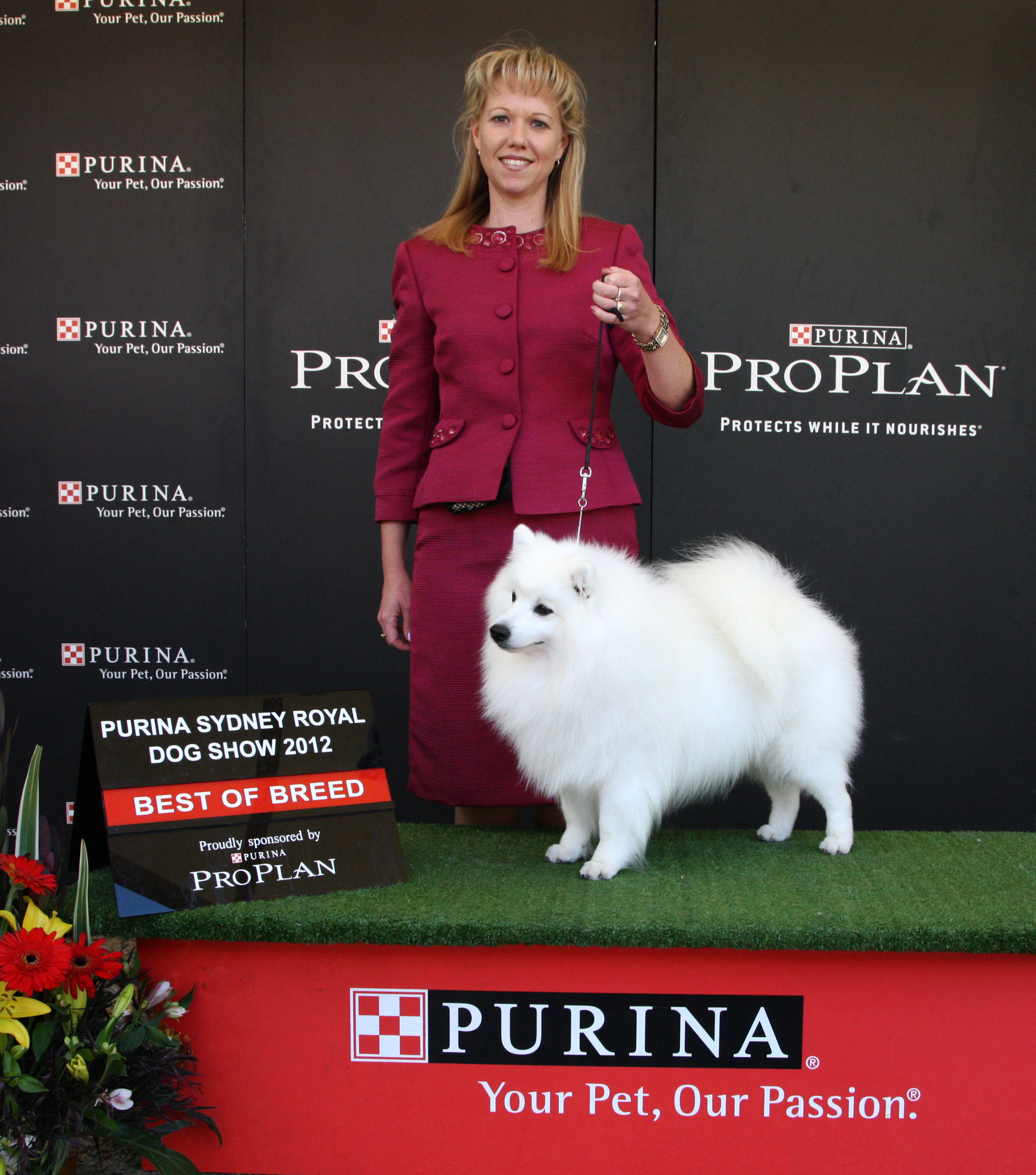Da-Vinci-BOB-Syd-Royal-Showing-Your-Japanese-Spitz