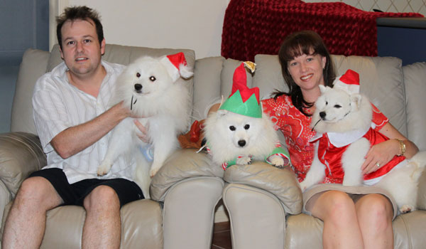 Jester-christmas-family-portrait-japanese-spitz