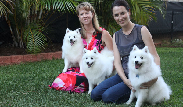 Three-Amigos-Elise-and-I-japanese-spitz