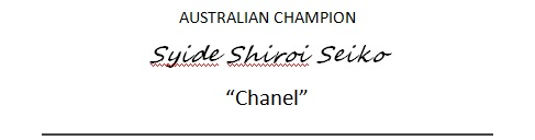 chanel-banner