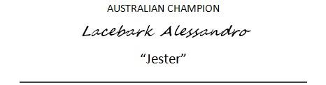 jester-banner